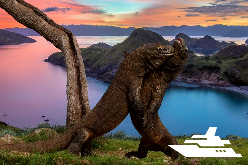 N123 LAND OF DRAGONS: KOMODO – BALI EXPEDITION